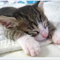 Photos: あまりにも心地良くて、寝ちゃったにゃぁ・・・