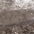写真: 山元町 がれき撤去作業 畑の土