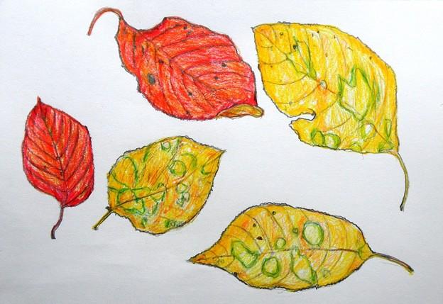 Photos: 秋の葉の・・