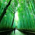 竹林を歩く