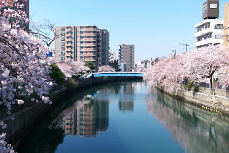 2012.04.09 大岡川桜のプロムナード 栄橋付近