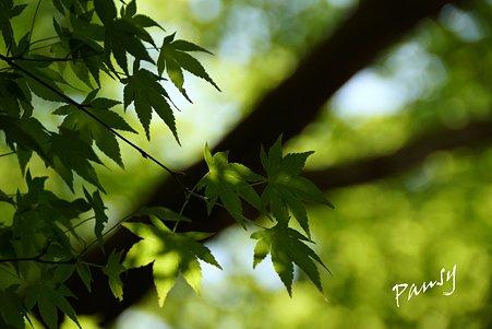 green..6