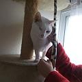 Photos: ぼんじぃがやたらと気に入ってた猫ちゃん
