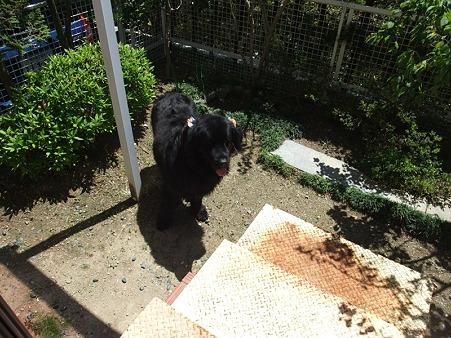 庭でトイレしてもいいんだって~~