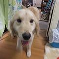 Photos: ガウらてもこの笑顔♪