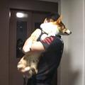 Photos: 抱っこしてエレベーターに乗っけてもらう幸太