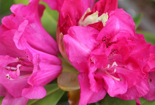 次々に咲く奇形花