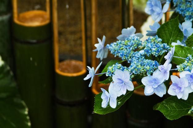 水に合う花