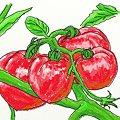 写真: トマト