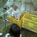 Photos: 小川村のヤギ~子供産まれてた~!