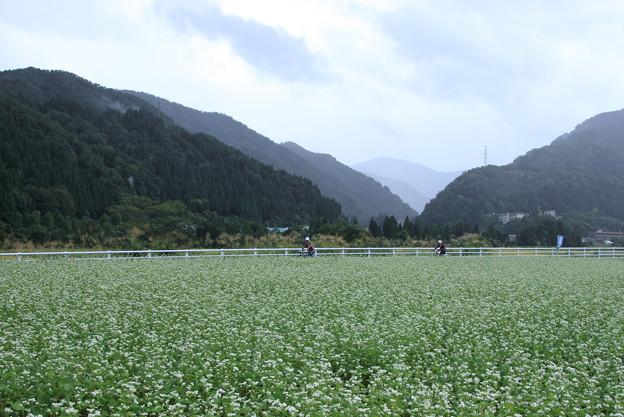 ソバ畑とサイクリングロード