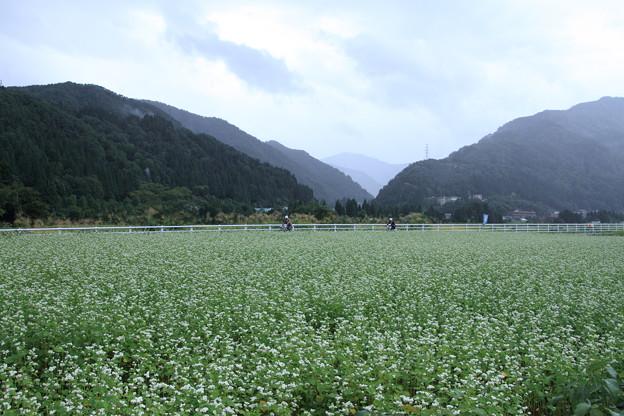ソバ畑とサイクリングロード 山並み