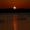 Photos: 印旛沼の朝