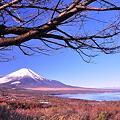冬へ富士山と山中湖・・パノラマ展望台から