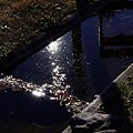 Photos: ~天の川~