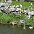 Photos: 野川にて