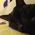 Photos: Ekkun_Sleepy-Dec24-2011