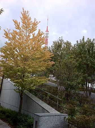芝公園も紅葉し始め