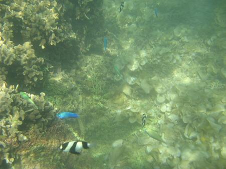 アルパット島近くで熱帯魚その05