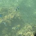 Photos: アルパット島近くで熱帯魚その13