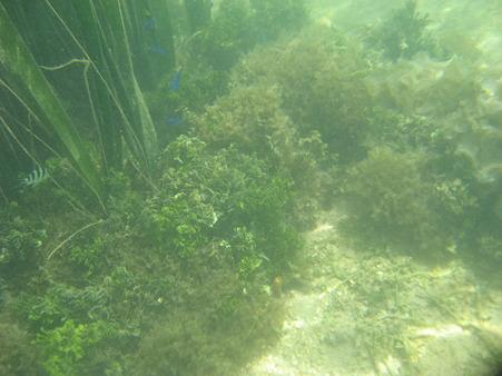 相方撮影の熱帯魚01