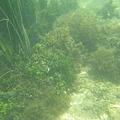 Photos: 相方撮影の熱帯魚01