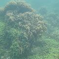 Photos: 相方撮影の熱帯魚18